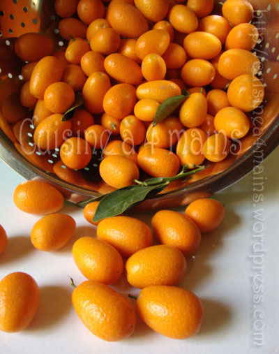 kumquat copy copy