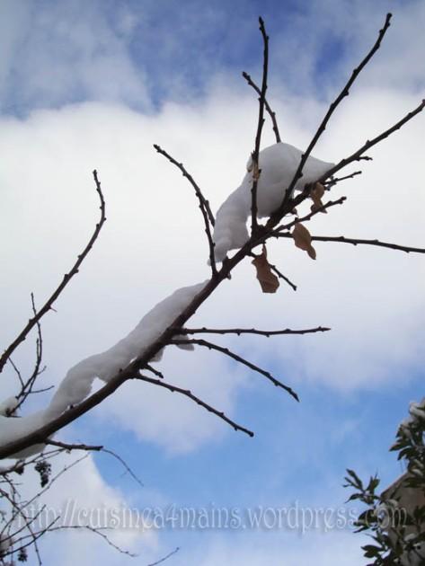 neige1 copie